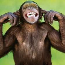 monkey-not-listening